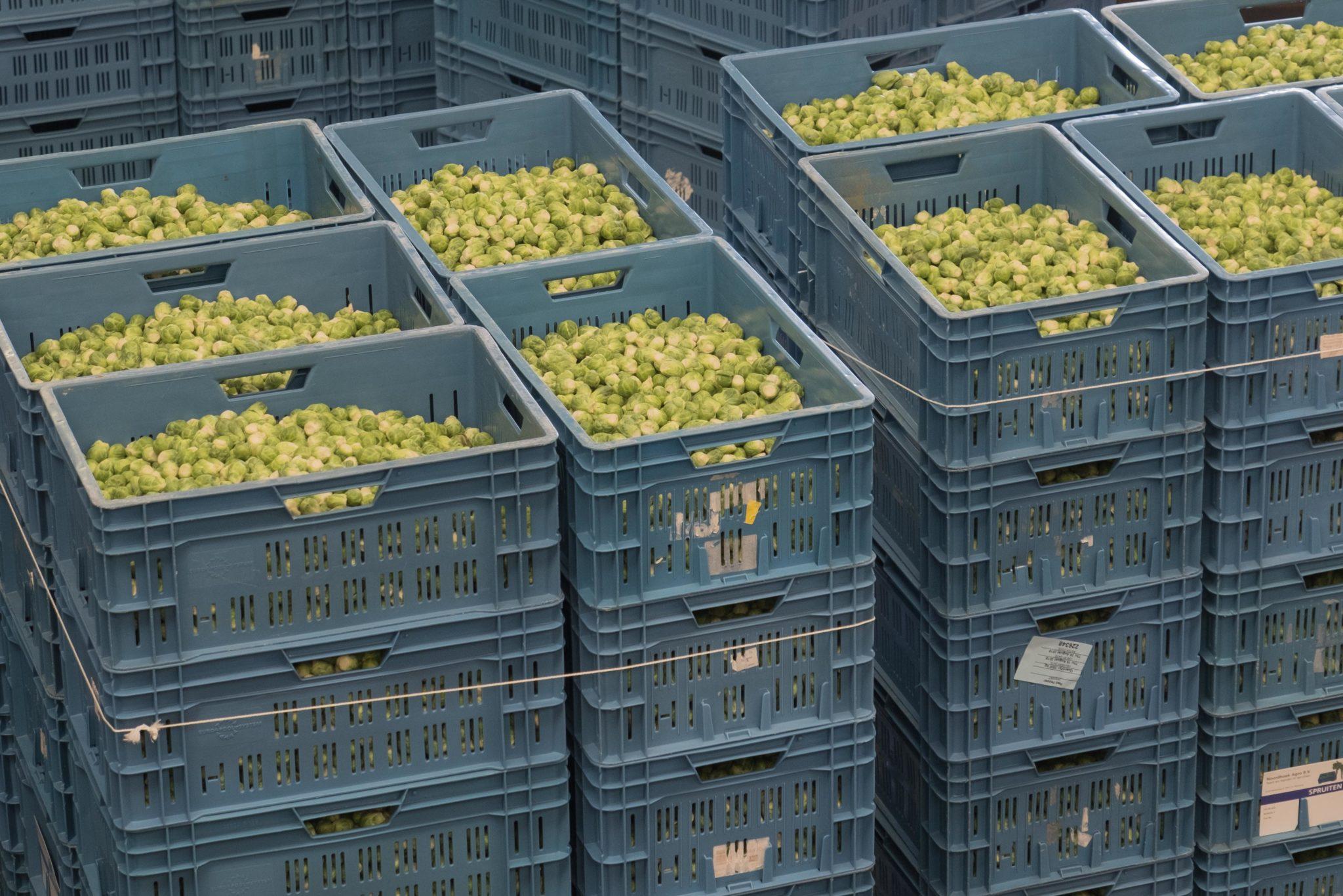 gesorteerde spruiten staan klaar voor de veiling