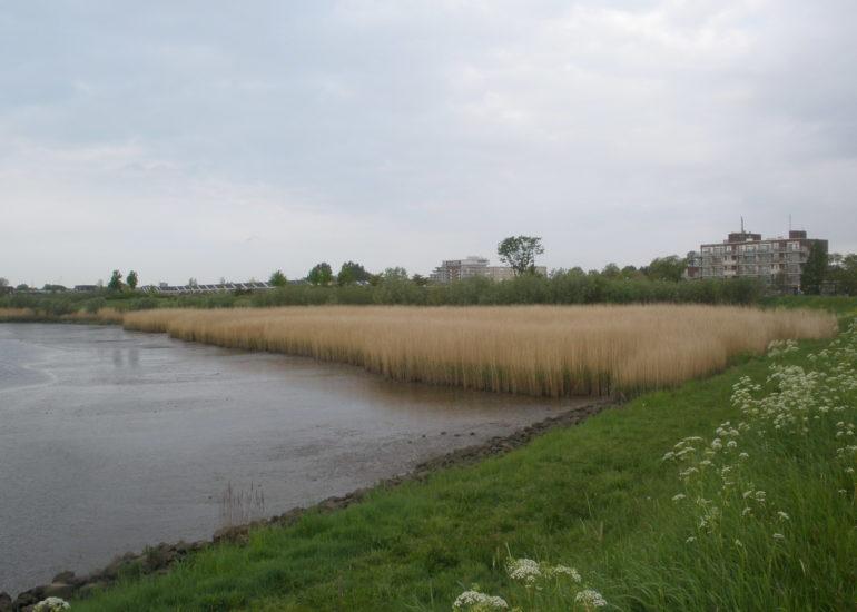 Groenedijk Capelle aan den IJssel